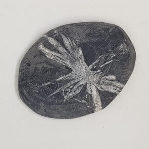 Crisantemo – Minerales Planos